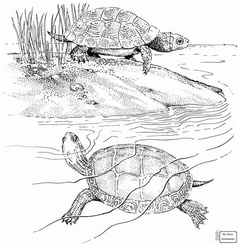 Alligator Snapping Turtle Coloring Page Printable