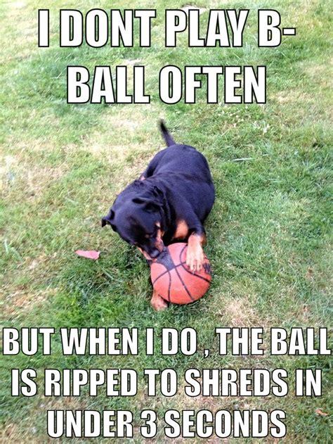 Rottweiler Memes - rottweiler made a meme of vegas 2013 funny pinterest