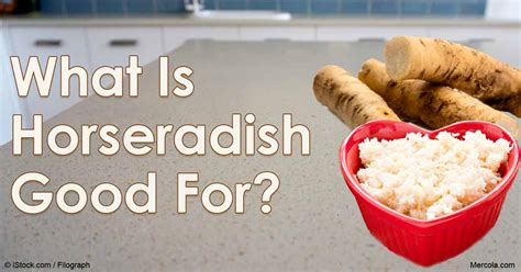 what is horseradish made from pics for gt horseradish