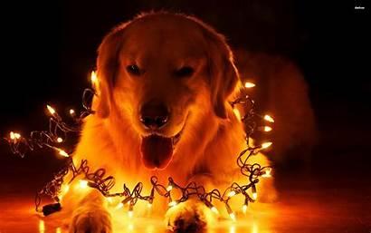 Christmas Dog Animal 1440p Wallpapers Holiday Lights