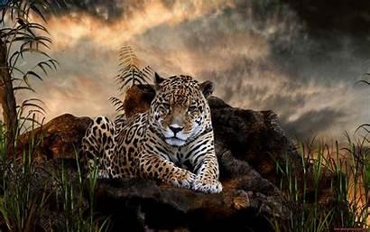 Animals Wild Desktop Wallpapers Animal Nature Jaguar