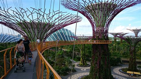 singapore gardens by the bay gardens by the bay trees grove skyway