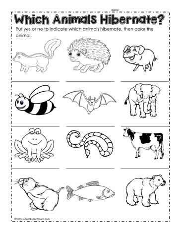 animals that hibernate winter theme animals that hibernate