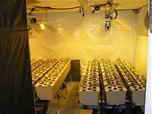 Indoor Grow Anleitung : indoor grow anleitung america 39 s best lifechangers ~ Eleganceandgraceweddings.com Haus und Dekorationen