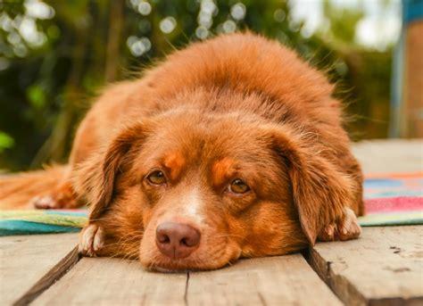 pet emergencies  require  attention peoria