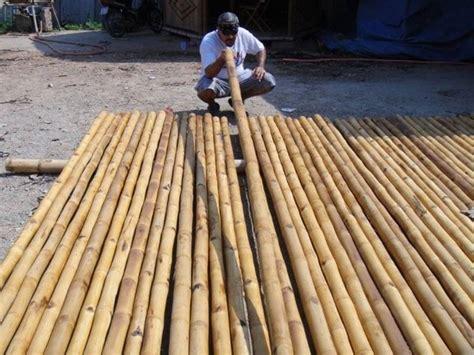 canna da giardino canne di bambu piante da giardino canne di bambu