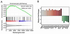 Gene expression profiling and functional analysis reveals ...