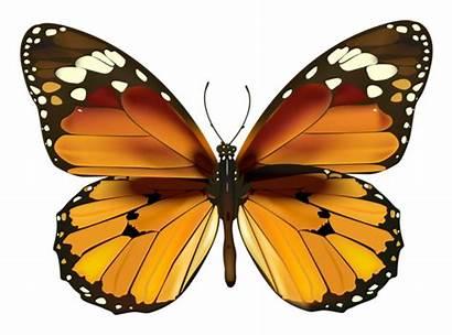 Butterflies Butterfly Clipart Yellow Transparent Borboletas Monarch