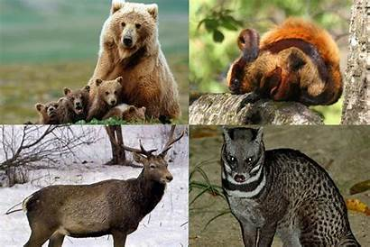 Species Endangered India Environment Critically