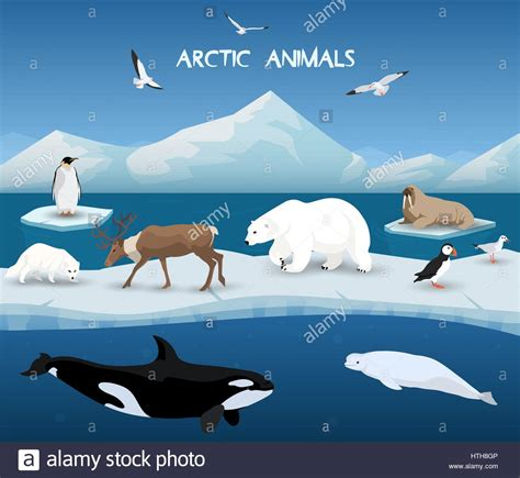 Arctic Background Arctic Animals Character And Background Winter Nature