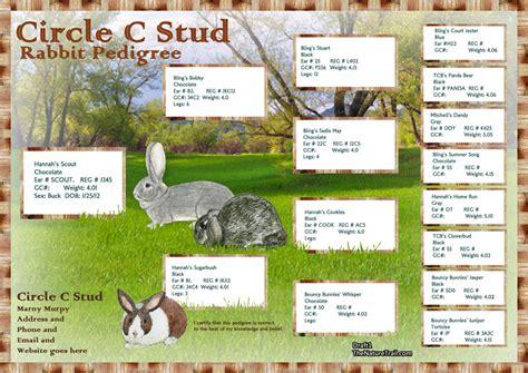 rabbit pedigree rabbit pedigree and logo designs last chance at 20 price rabbit smarties creative