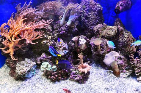 saltwater aquariums controlling nitrates in saltwater aquariums