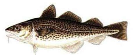 fish species nhoutdoorscom