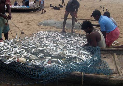 fish farming  india guide   start fish farming