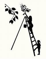 Cherry Picking Clip Vector Silhouette Illustrations sketch template