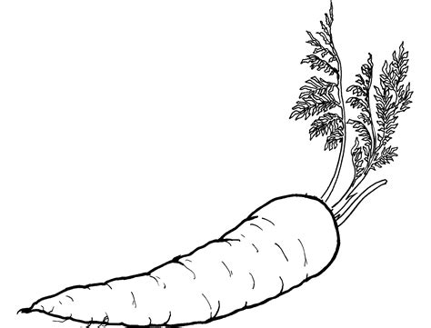 Carrot Clipart Coloring Page Pencil And In Color Carrot