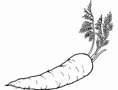 Coloring Vegetable Pages Carrot