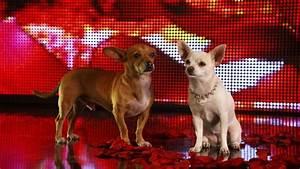 Beverly Hills Chihuahua 2 Blu-ray