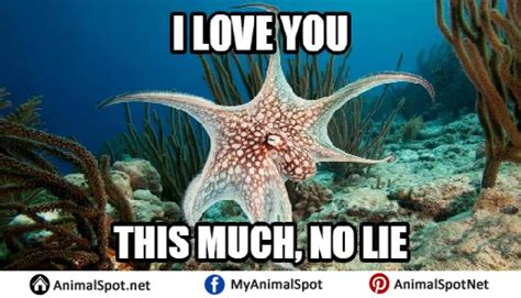 Octopus Meme Octopus Memes
