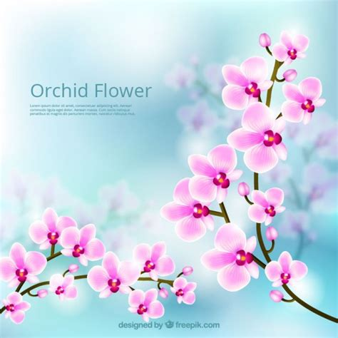 Orchid flower lovely background Vector   Free Download