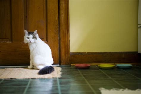 Reasons Why Cats Poop On Rugs And How To Stop It