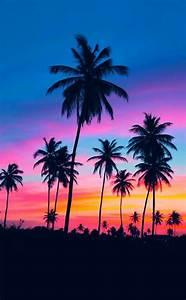 Bilder Von Palmen : einmalige bilder von palmen bunter hintergrund sweet pics pinterest bunte hintergr nde ~ Frokenaadalensverden.com Haus und Dekorationen