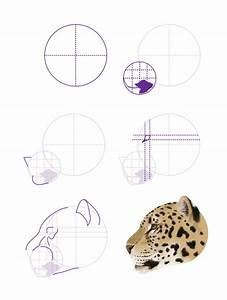 How To Draw Animals  Big Cats  Their Anatomy And Patterns