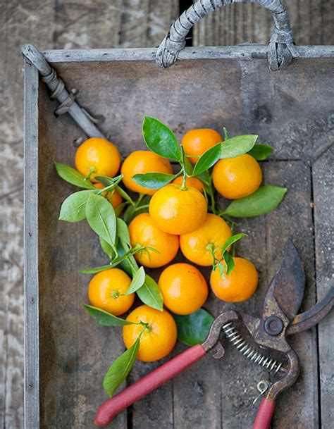 dessert avec des clementines que faire avec des cl 233 mentines 224 table