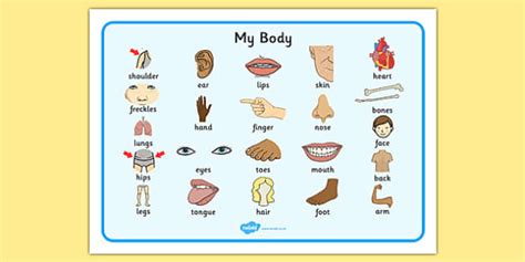 body word mat parts   body eyes nose mouth