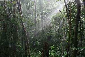Biomes  Rainforests