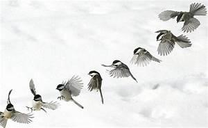 flying chickadee - Google Search | Tattoo's | Pinterest