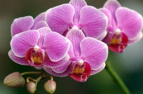 caring for an orchid after it blooms how to care for orchids after blooms fall off typesofflower com