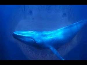 REAL GIGANTIC MEGALODON SHARK CAUGHT ON CAMERA 2015 ...