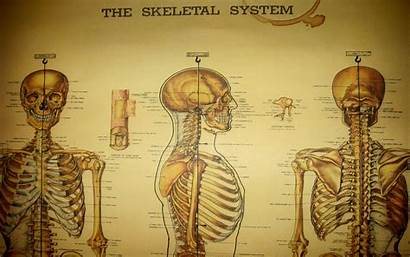 Medical Anatomy Desktop Wallpapers Backgrounds Medicine Skeletons