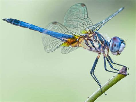 dragonflies  frogs inspired    biomimicry