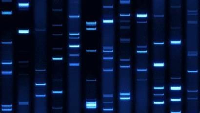 Dna Fingerprint Sequence Behance