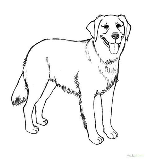 realistic golden retriever coloring pages   draw