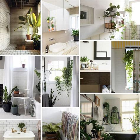 plants in the home bathroom the plant new york and design