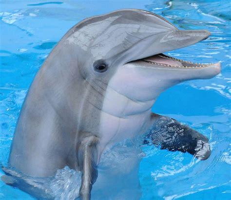 19 Datos Curiosos Sobre los Delfines | Aquatours Blog ...