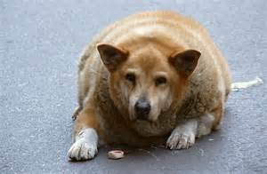 Funny Fat Dogs