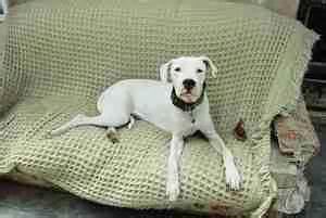empecher un chien de monter sur le canapé agressivité territoriale du chien