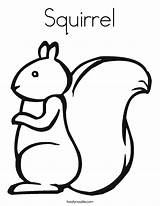 Squirrel Coloring Template Squirrels Paper Twisty Built California Usa Twistynoodle sketch template