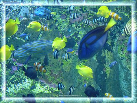 scenery wallpaper fond d 233 cran gratuit aquarium anim 233
