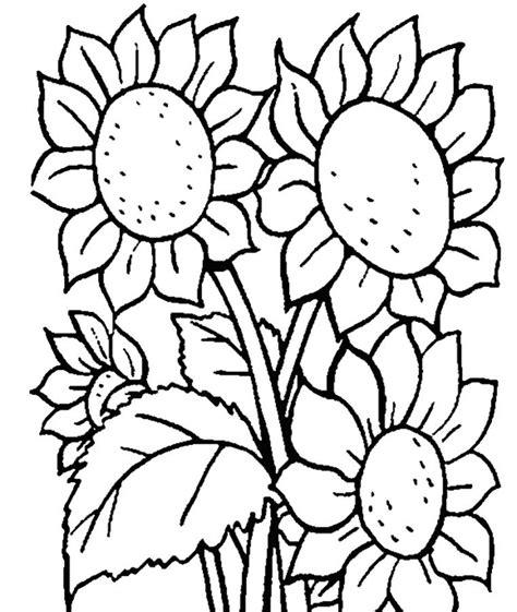 Gambar Bunga Mawar Kartun Harian Nusantara