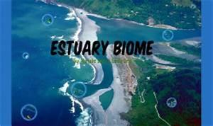 Estuary biomes by Emily Ung on Prezi