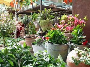 Kübelpflanzen Für Terrasse : dekorative geh lze gitterseeflorist in dresden ~ Lizthompson.info Haus und Dekorationen