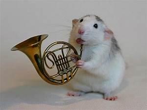 Cute Rat Musician - XciteFun.net