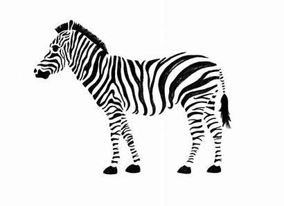Zebra Animated Gifs Promo Aragoste Liberate Animals