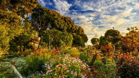 amazing garden  algarrobo chile hd wallpaper