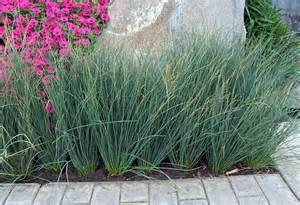Blue Arrows - Green Meadow Growers